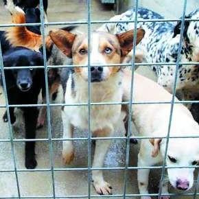 Cani anziani via dal canile: prende il via Mille Famiglie Per Mille Cani Anziani