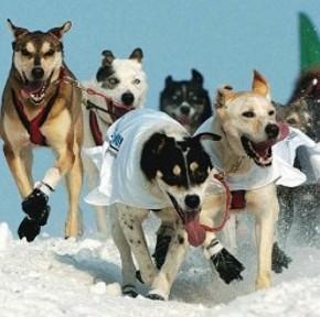 Neve, sale e ghiaccio: come proteggere le zampe del cane