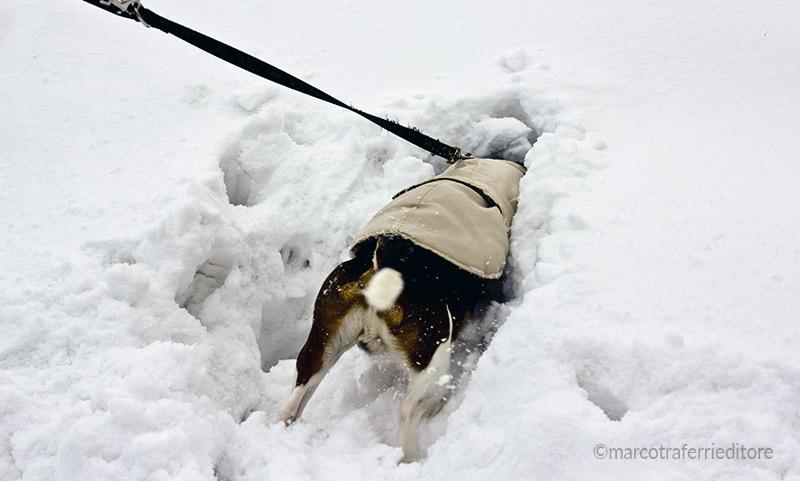 Cani sulla neve: come proteggerli