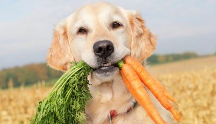 Cani vegetariani