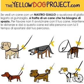 Il tuo cane ha bisogno di spazio? Nasce The Yellow Dog Project