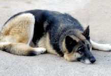 Cani abbandonati a Pasqua: 44 le segnalazioni