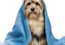 Come e quando fare il bagno al cane: 6 consigli utili