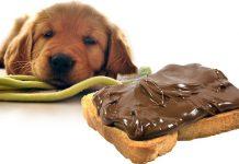 Cioccolata, veleno per il cane