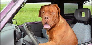 Cani in auto: come farli viaggiare