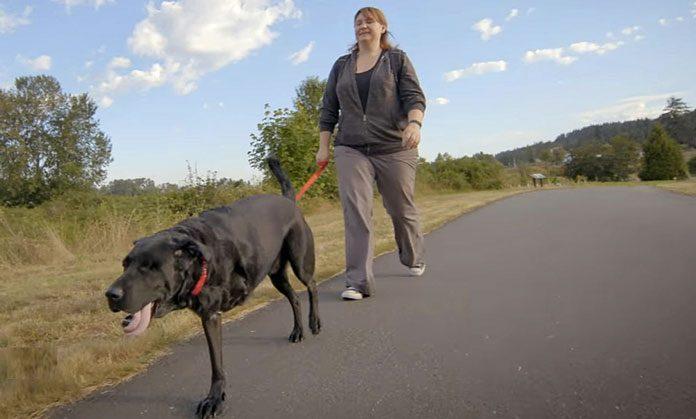 Un cane e la sua proprietaria imparano a camminare insieme dopo un brutto incidente