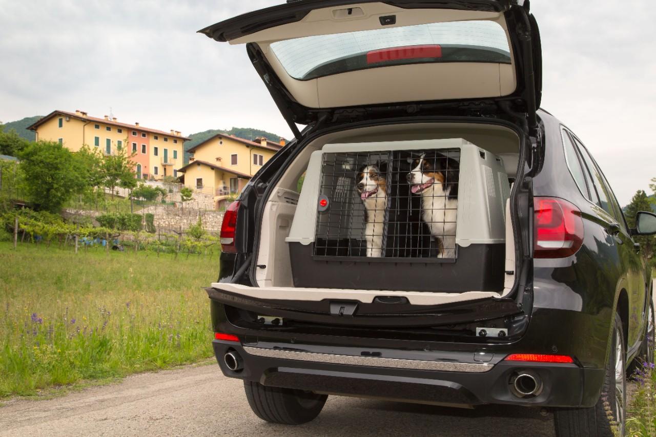 Cani in viaggio: il trasportino