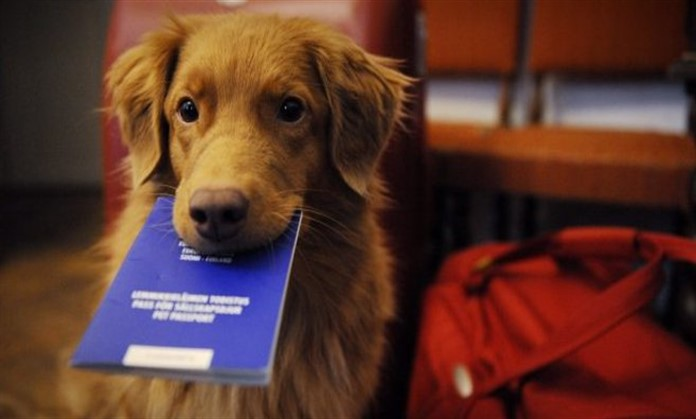 Viaggiare in treno col cane: le regole di Italo