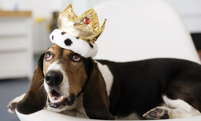 Viaggiare col cane: nel lusso dell'Hotel Rome Cavalieri