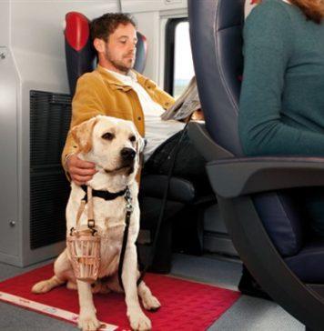 Viaggiare in treno col cane: le regole di Trenitalia