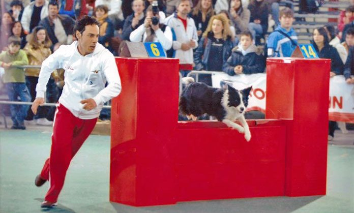 Cos'è l'Agility Dog? Intervista all'istruttore Francesco Boari