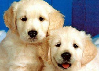 Nomi per cani femmina: le nuove tendenze