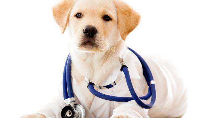 Cani e Pet Therapy: Quali le razze più adatte?