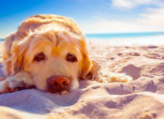 Cane: colpo di sole e colpo di calore
