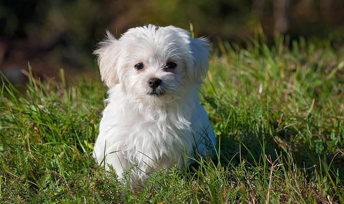 Come scegliere il nome del cane